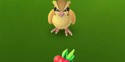 Как ягода Razz Berry помогает ловить покемонов?