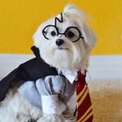 Игра Тест: Выбери щенка и мы распределим тебя на факультет в Хогвартс?