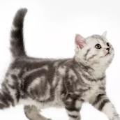 Игра Тест: Разбираетесь ли вы в поведении кошек?