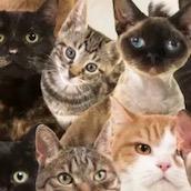 Игра Тест: Какой из тебя кот или кошка?