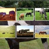 Игра Пазл с Лошадьми