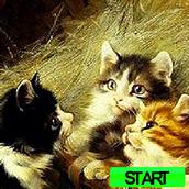 Игра С цифрами: поиск на котятах