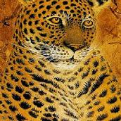 Игра С цифрами: поиск на леопарде