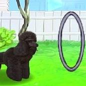 Игра Уход за животным на свежем воздухе